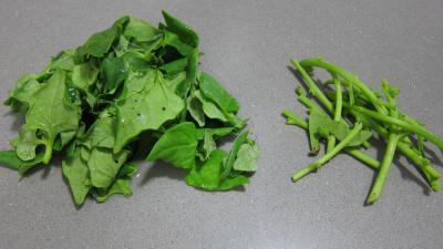 Tétragone en salade - 1.1