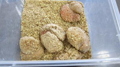 Chorizo, quinoa et coquilles Saint-Jacques - 8.3