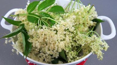 Beignets aux fleurs de sureau - 1.1