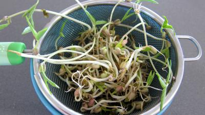 Salade tiède de poisson - 1.2