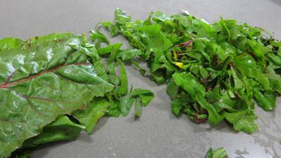 Conserve de ragoût de blettes et d'oseille au basilic - 4.2