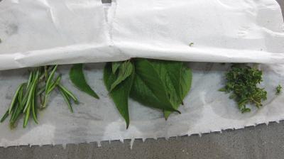 Aubergines à la mexicaine revisitées - 3.1