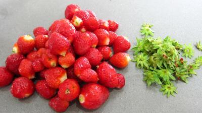 Riz noir aux fraises et crème à la noix de coco - 4.2