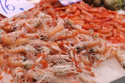 Photo : Cigales de mer
