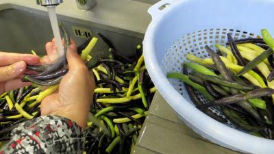 Stérilisation des haricots verts - 3.1