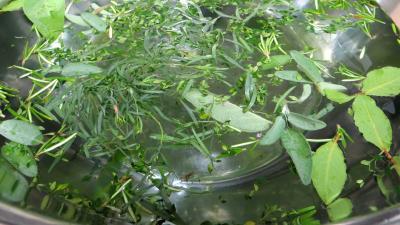 Conserves de légumes d'été (poivrons, poireaux, brocolis, épinards) - 5.1