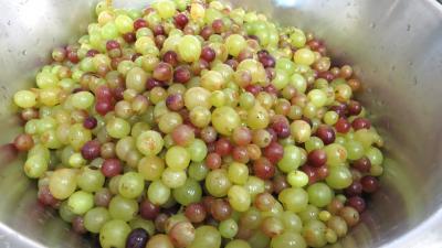 Gelée de raisins à la rhubarbe - 1.2