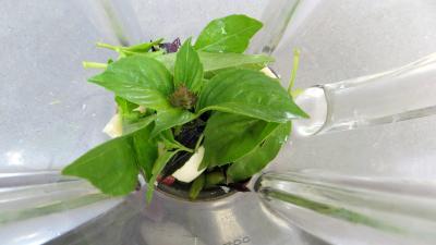 Salade de courgette crue au pesto - 4.4