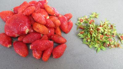 Verrines de fraises aux petits suisses - 1.2