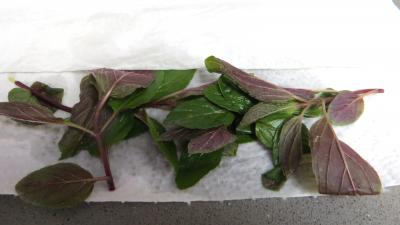 Haricots mungo en salade - 1.4