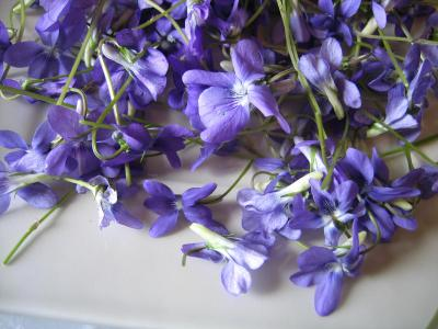 Photo : Violettes