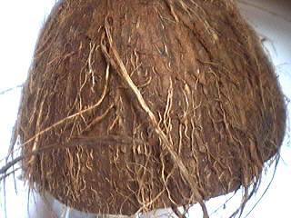 peau noix de coco