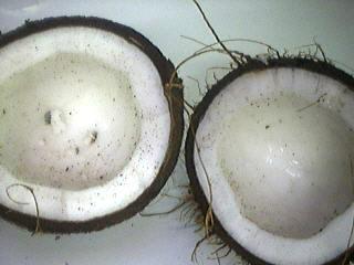 cassons la noix de coco