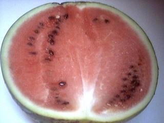 pastèque rouge