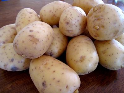"""Image : Pommes de terre """"Agata"""""""