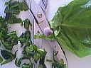 Omelette aux poivrons - 3.1