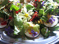 Image : Assiette de violettes et primevères en salade