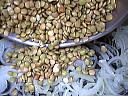 Lentilles aux oignons - 4.1
