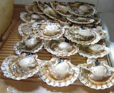 Photo : Coquilles Saint Jacques