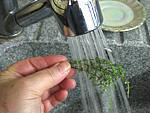 Velouté d'épinards aux tomates - 2.4
