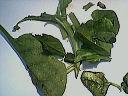 Saumon en croûte à la julienne de légumes - 3.3
