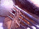 Saumon en croûte à la julienne de légumes - 7.1