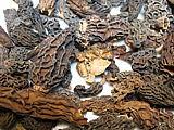 Lyophilisation des champignons