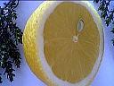 1/2 citron
