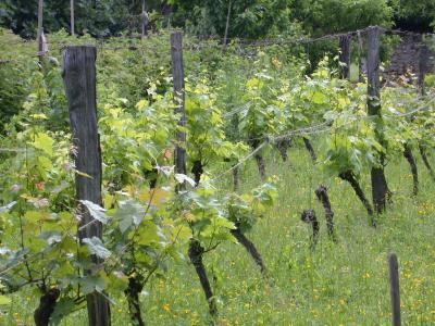 Image : Langage du vin (b)
