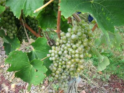Image : Langage du vin (C)