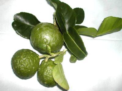 Photo : Des combavas et leurs feuilles