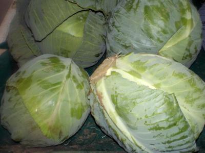 choux verts