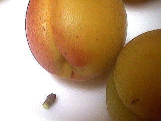 Abricots à l'eau de vie - 1.2