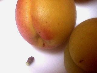 Abricots et pruneaux au sirop - 1.2
