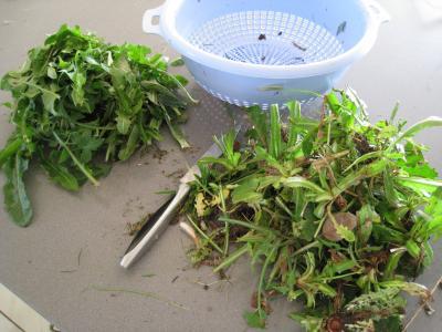 Salade de pissenlits au lard à l'ardennaise - 2.1