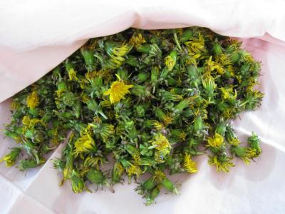 Gelée ou cramaillote de fleurs de pissenlits - 1.3