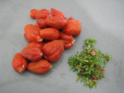 Sauce glacée aux fraises - 1.2