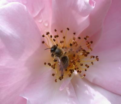 Photo : Pollen