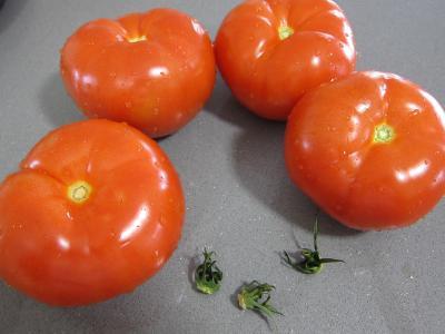 Tomates farcies chipolatas et merguez - 2.1